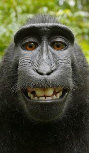 Aap neemt selfie